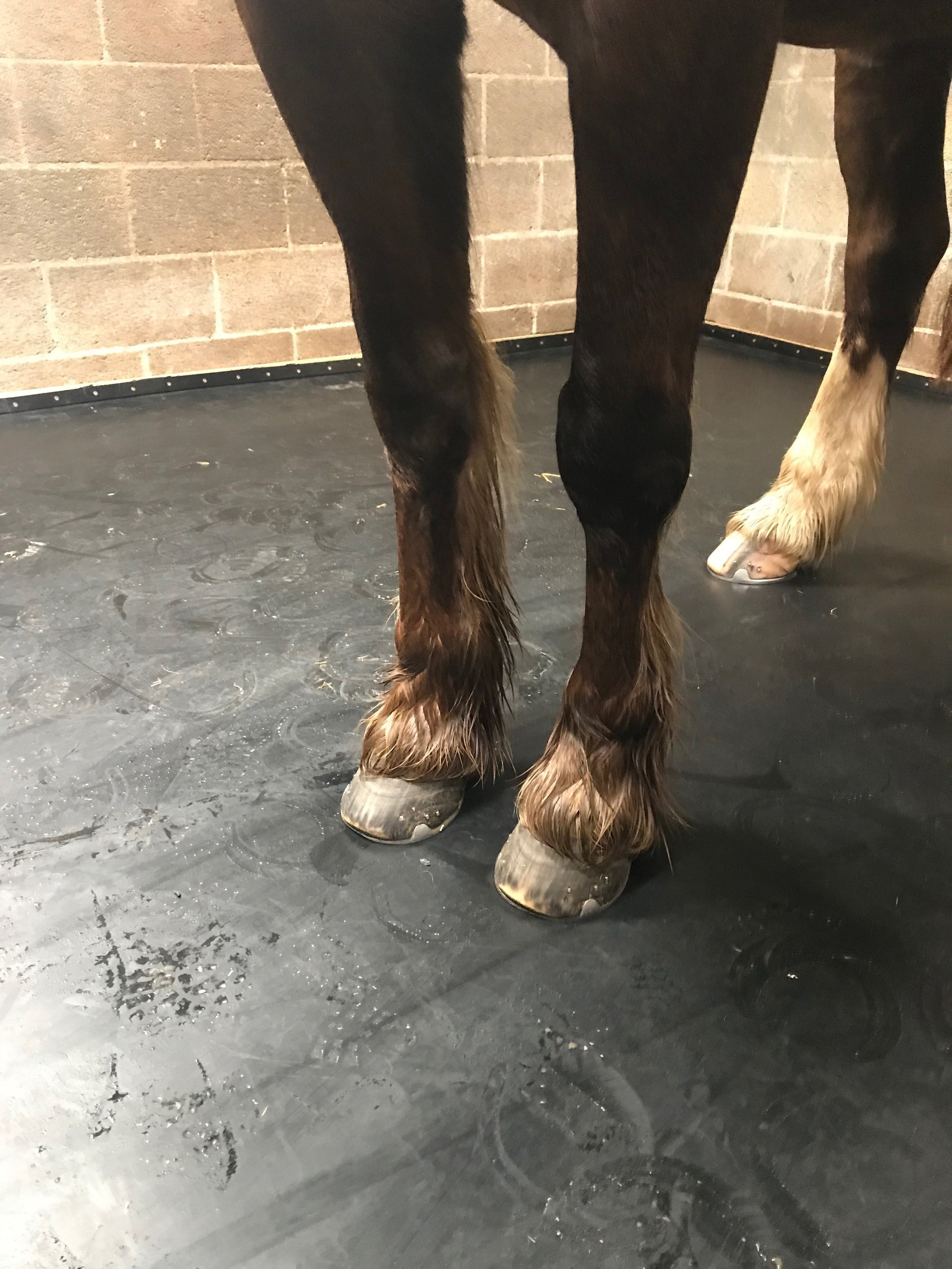 ComfortStall is a sealed flooring system that's good for you and your horse's health