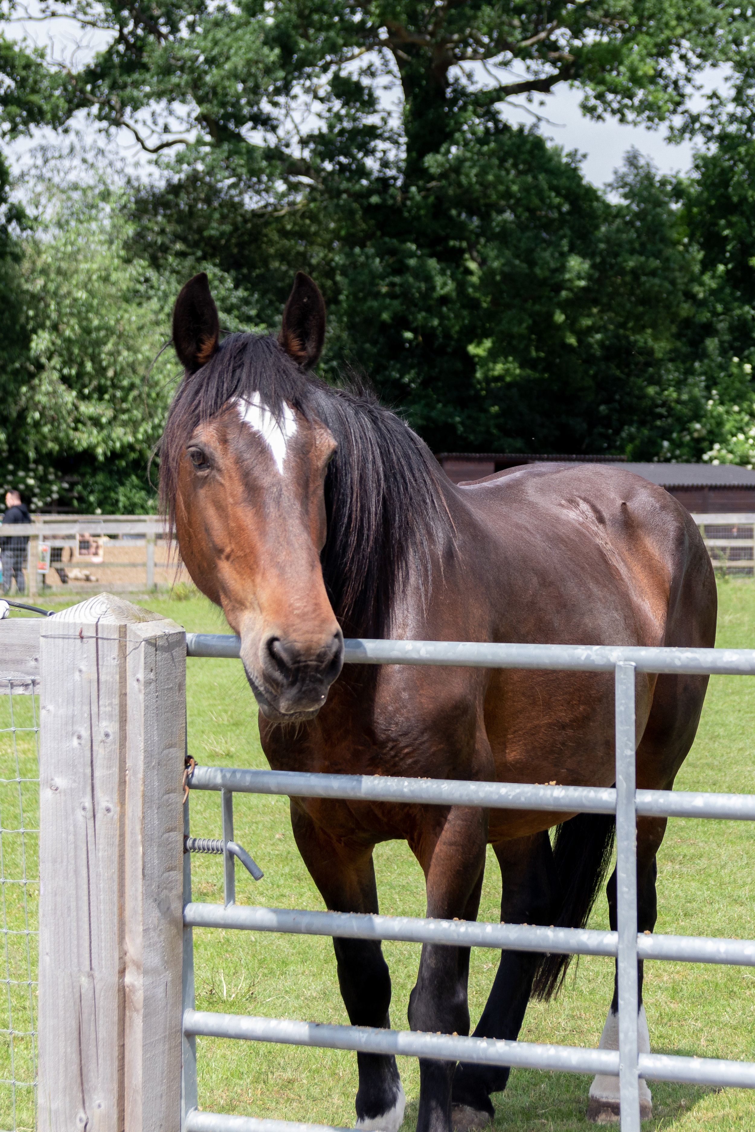 Carmen will probably stay at Redwings to receive speclaist care
