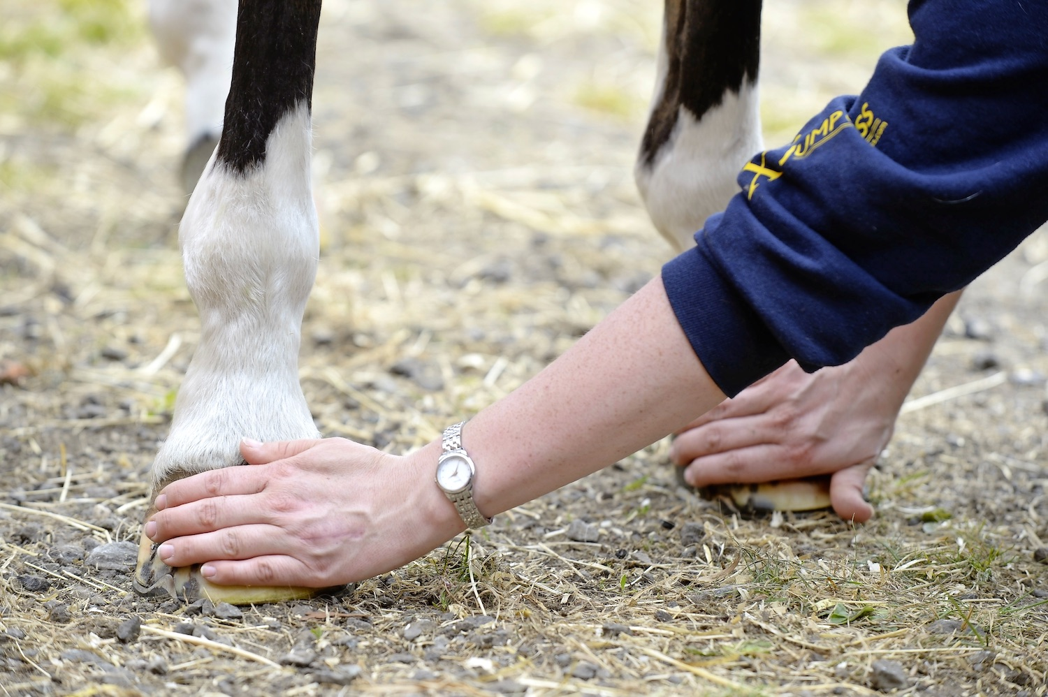 Keeping your horse's hooves healthy is essential