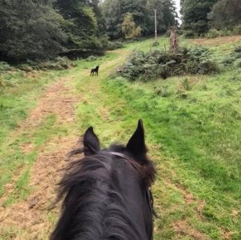 Helen Chivers hacks Lloyd alongside her dog, Burghley