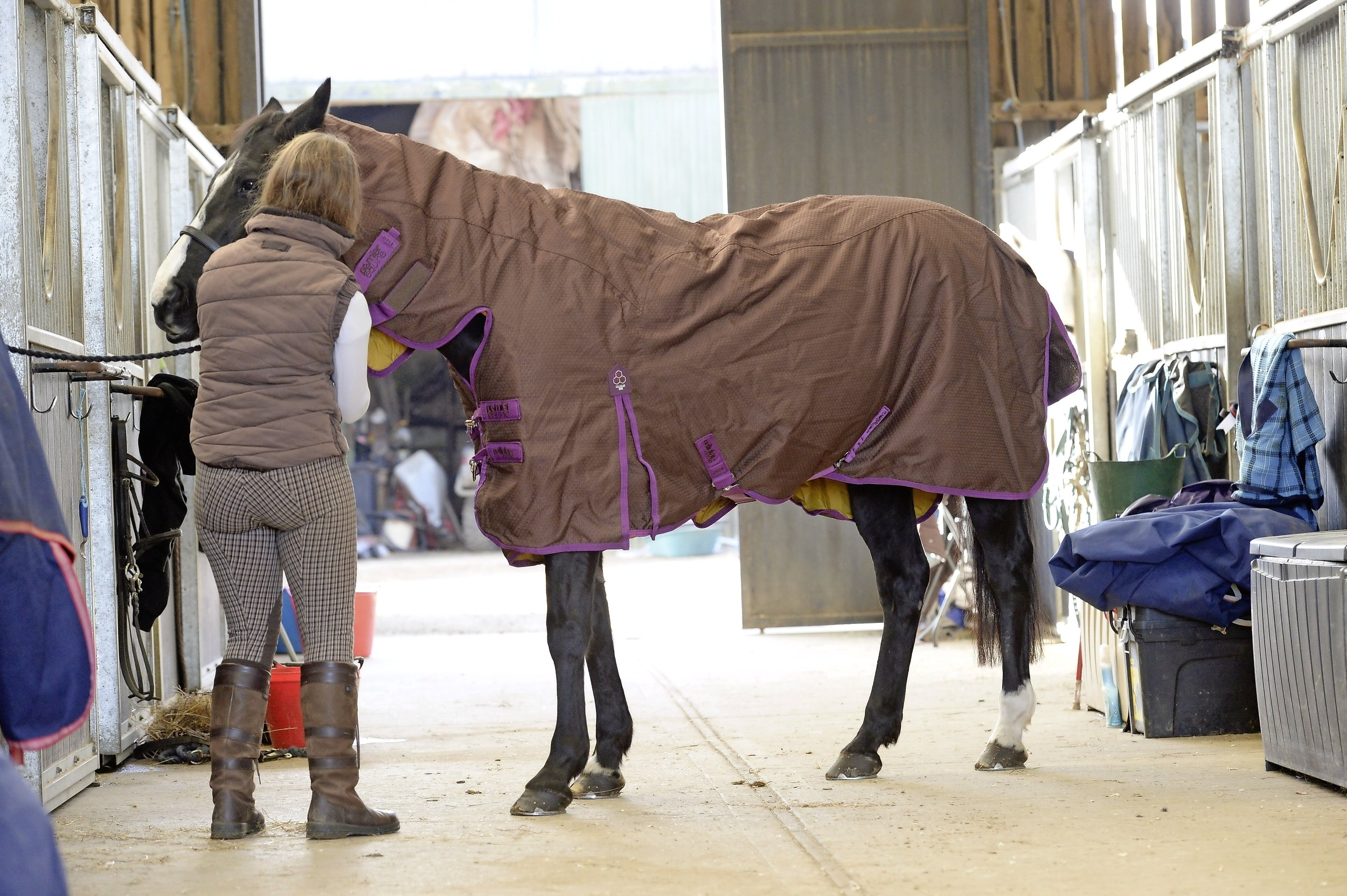 Older horses need a little more TLC in the winter