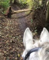 Lesley's horse enjoyed a little jump out on their hack