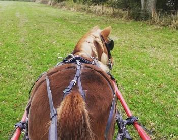 Karen Simons-Musilova takes Roo out for drives