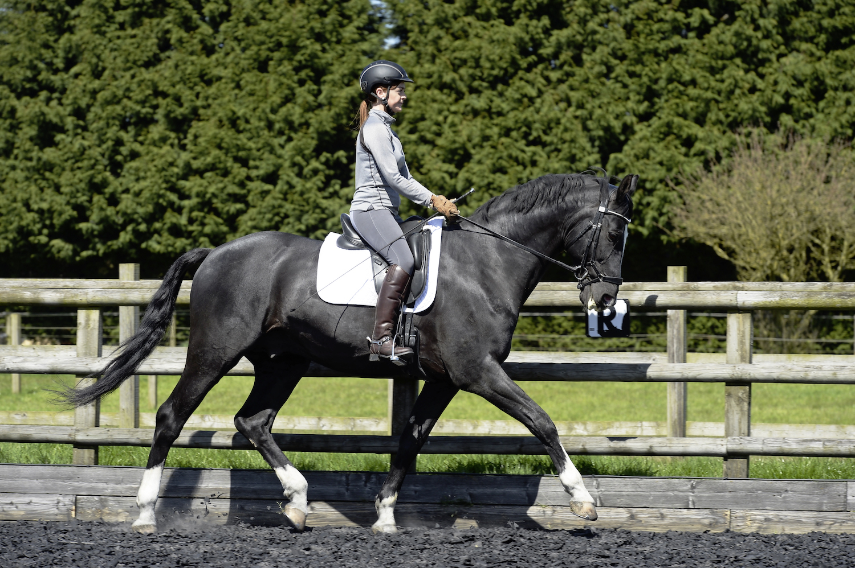 Horse trotting.jpg