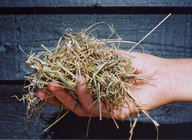 Hand with hay.jpg