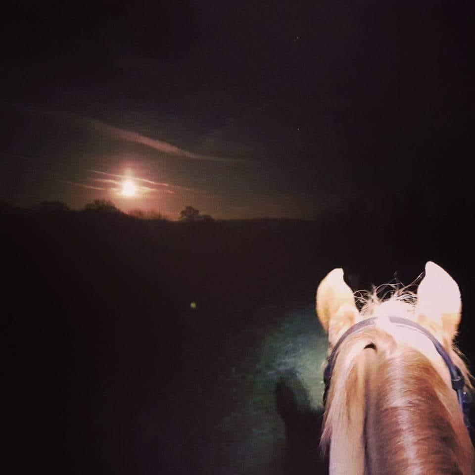 Hayley Dawson's horse enjoys night-time hacks