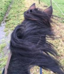 Gillian Kedzierski's horse models the windswept look