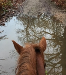 Shauna Fowles' steed doesn't mind getting his hooves wet!