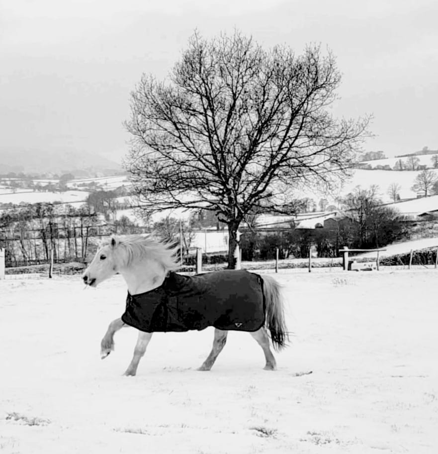 Queenie (18) enjoying the snow in Abergavenny.