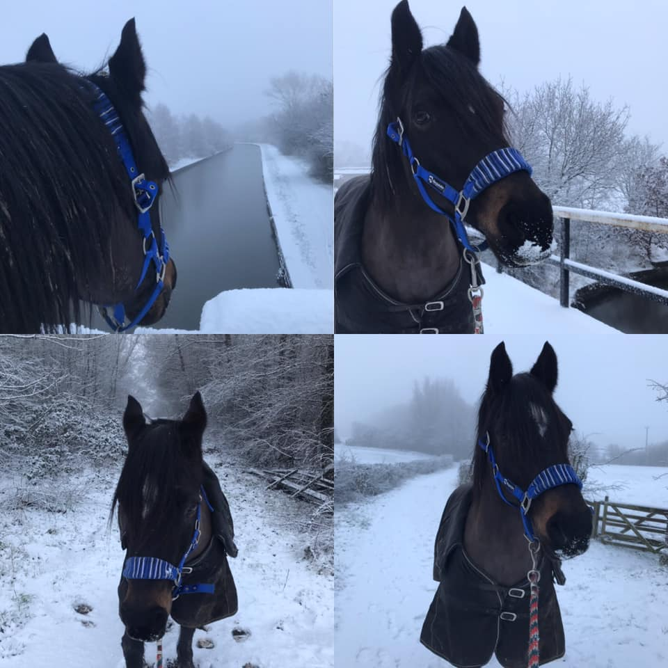 Esprit having a stroll in the snow.