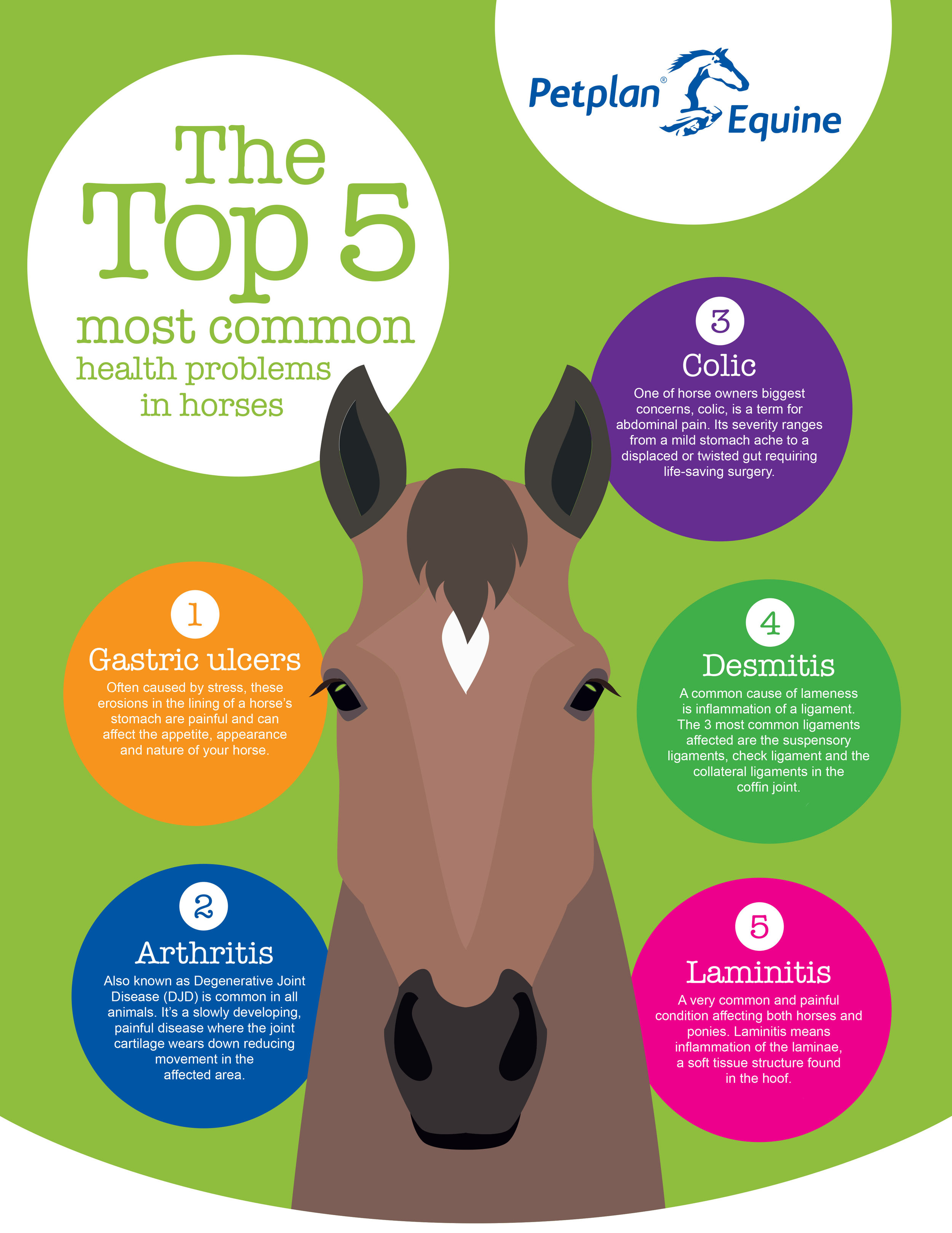 Petplan Equine Top 5 - The facts.jpg