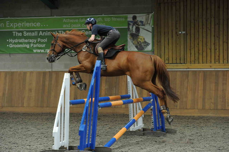 jumping+a+horse+indoors.jpg