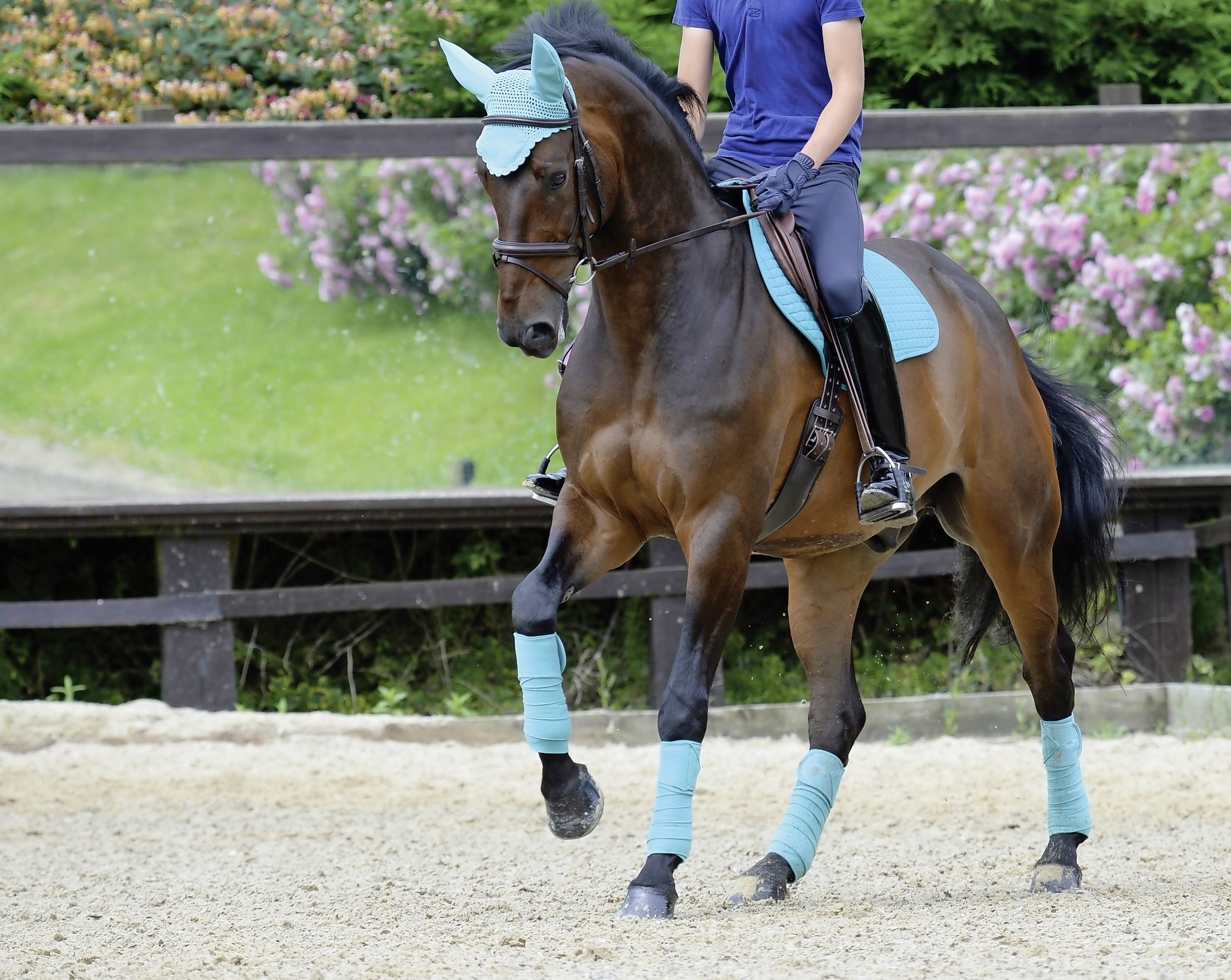 Colourful Clothing Which Colours Will Suit Your Horse Your Horse Magazine