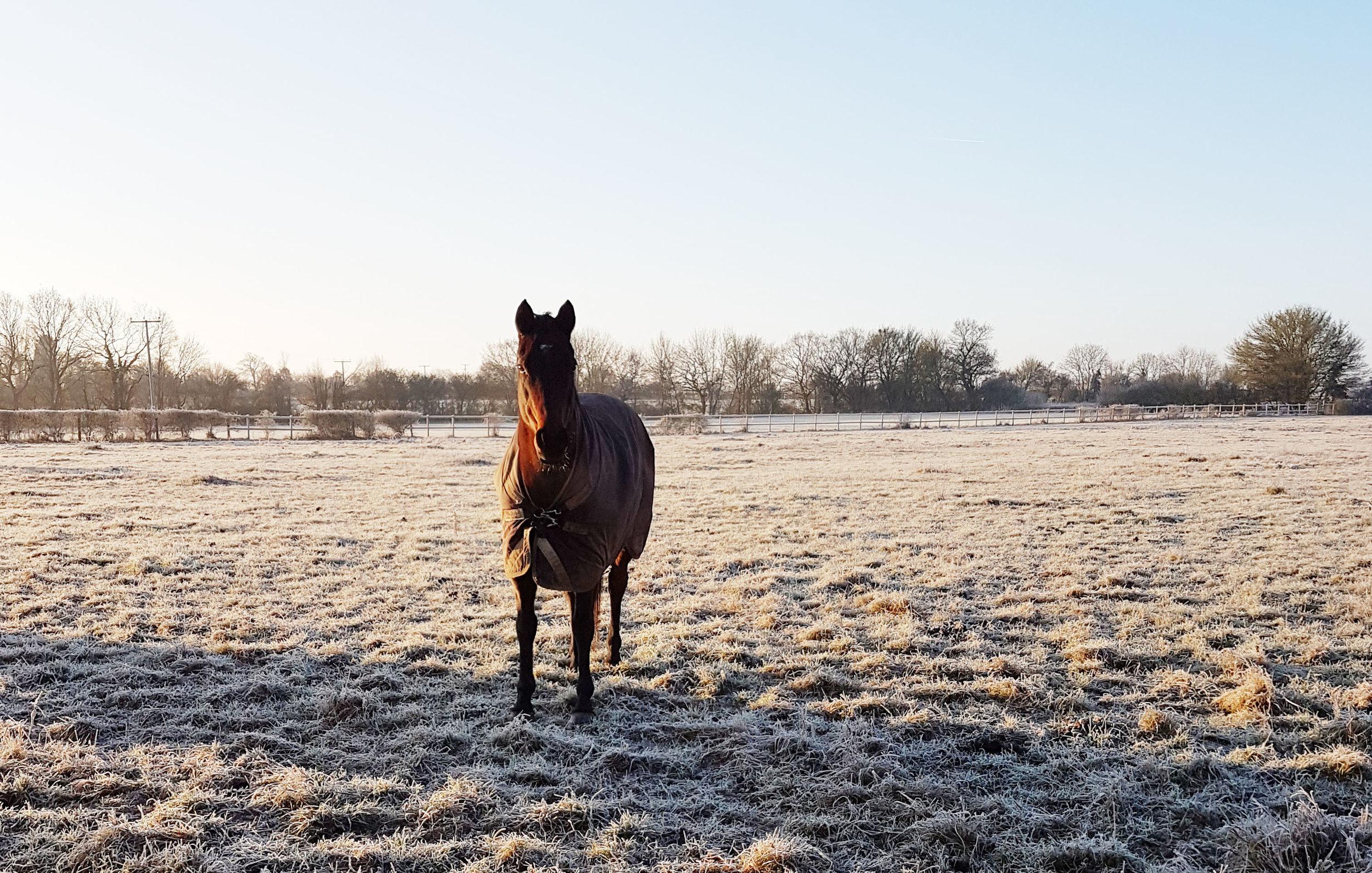 Sunny frosty morning.jpg