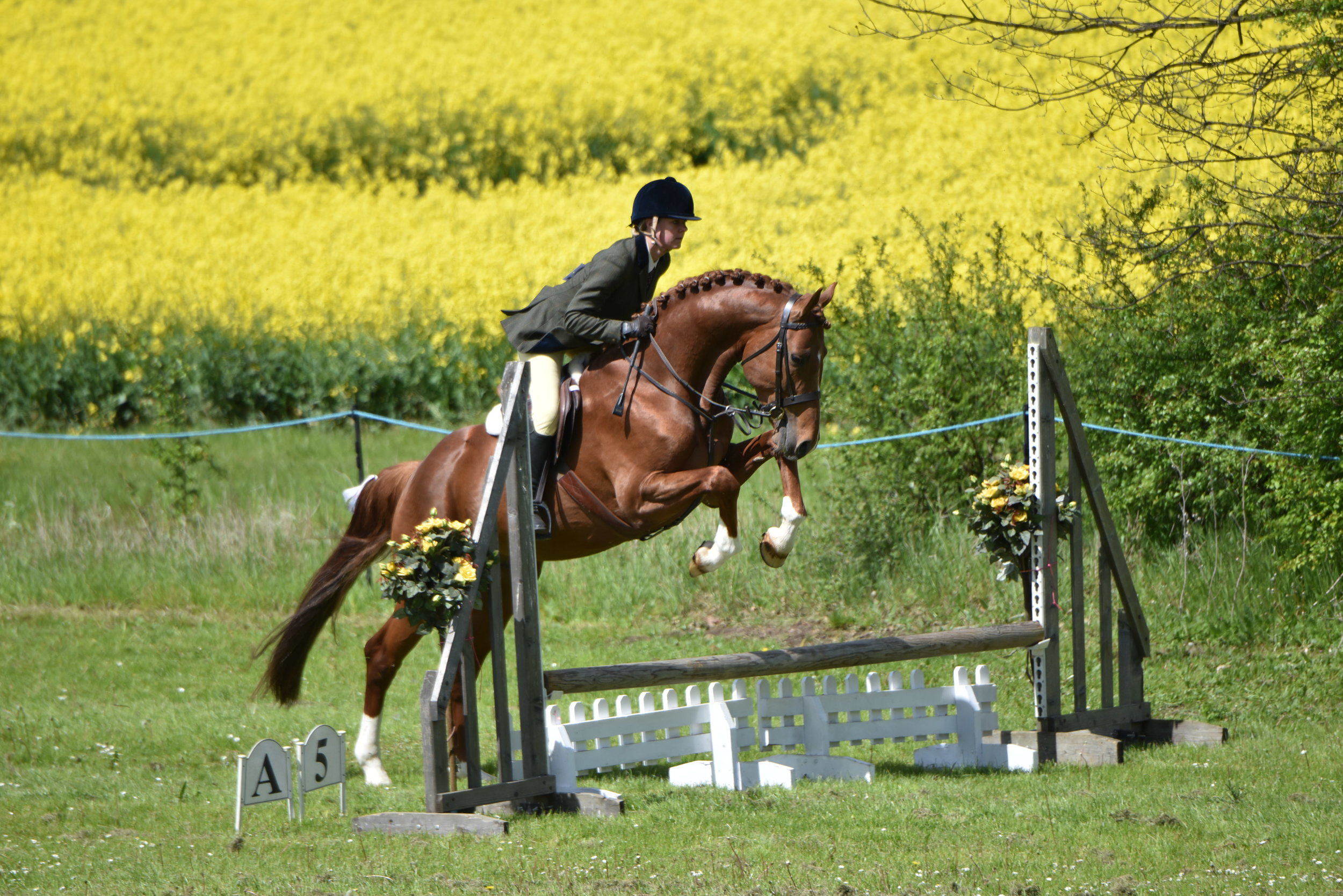 There was also plenty of healthy competition on offer for those more experienced, with many returning champions and those fresh from major national shows challenging each other for the top prizes.