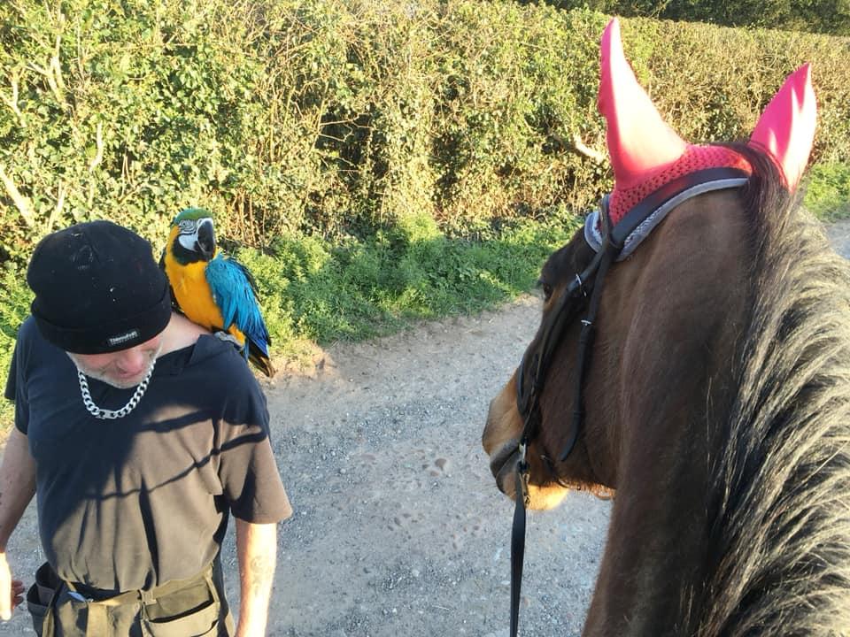 Aislinn saw a man taking his parrot for a walk