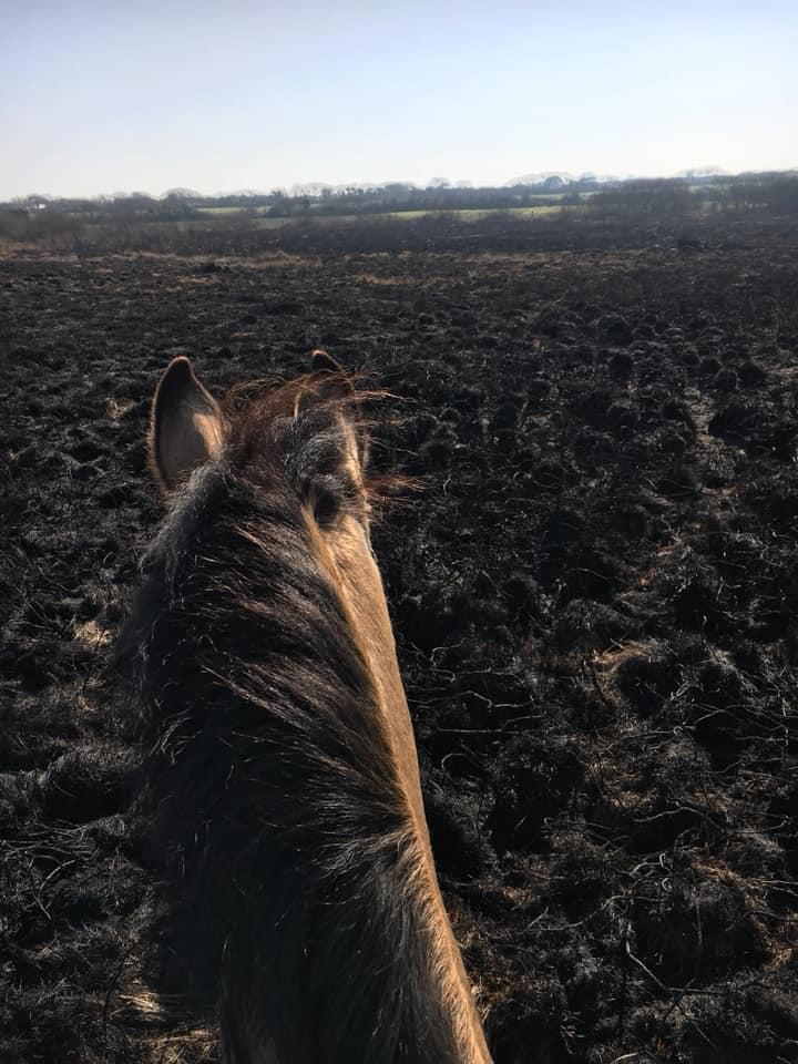 Cerys and Ara rode across a burnt moor