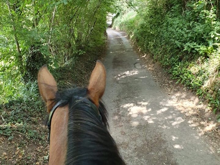 After being diagnosed with laminitis last summer, spending 10 months on box rest with no guarantees of recovery, my favourite thing is just being able to get back on board and pootle around the countryside with my mare.  Teresa Hogg