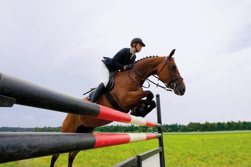 Horse jumping (MSD owned).jpg