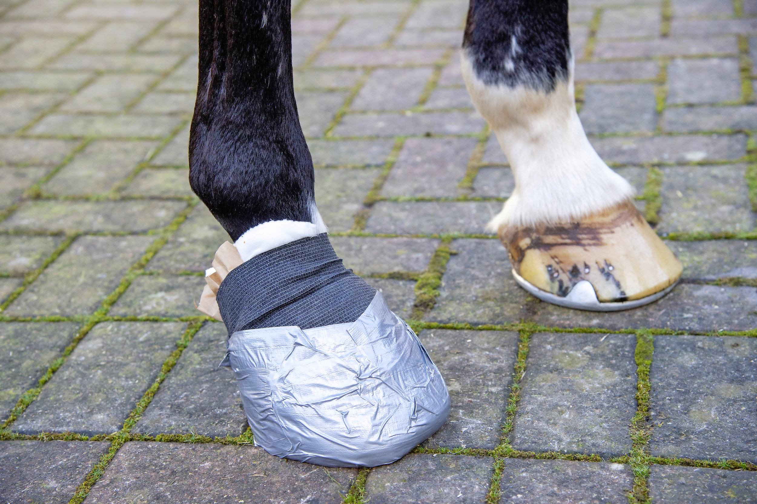 Alan Davies explains how to apply the perfect poultice Your Horse