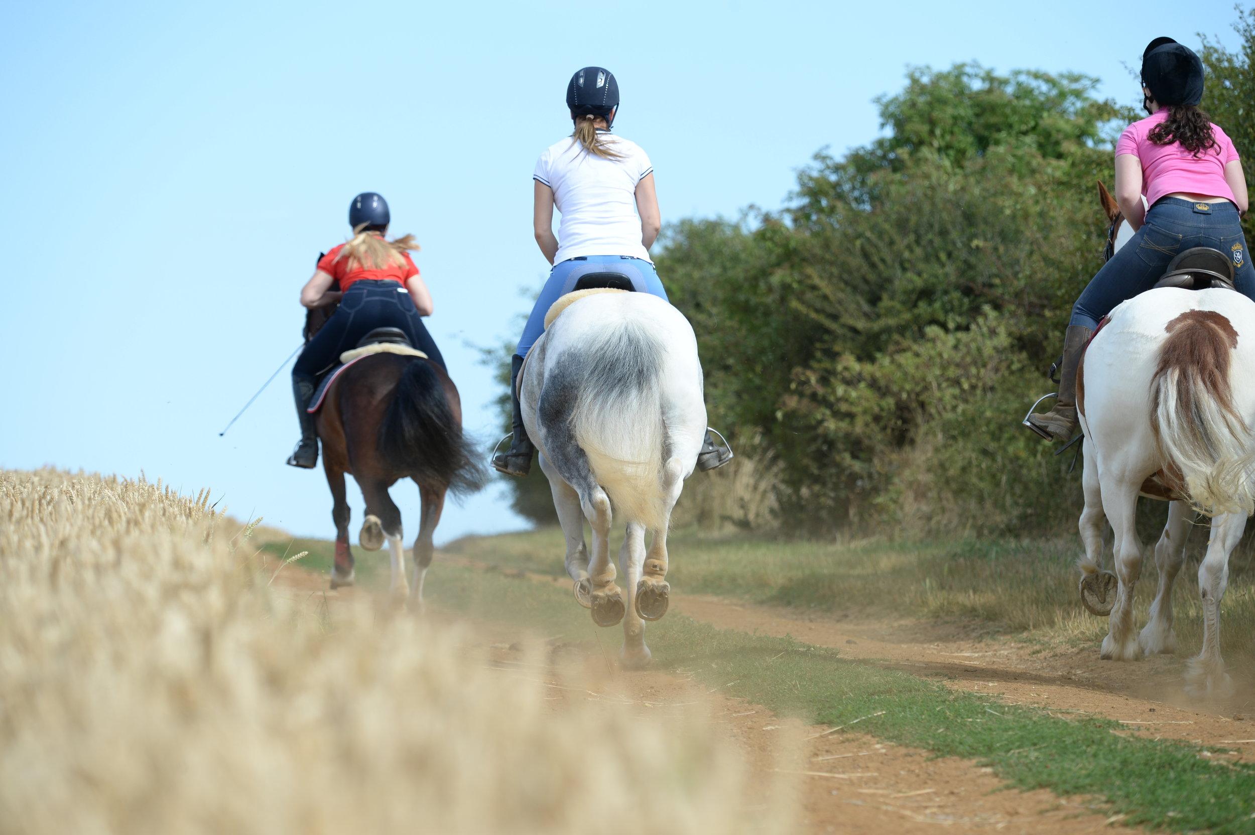 gallop hard ground.JPG