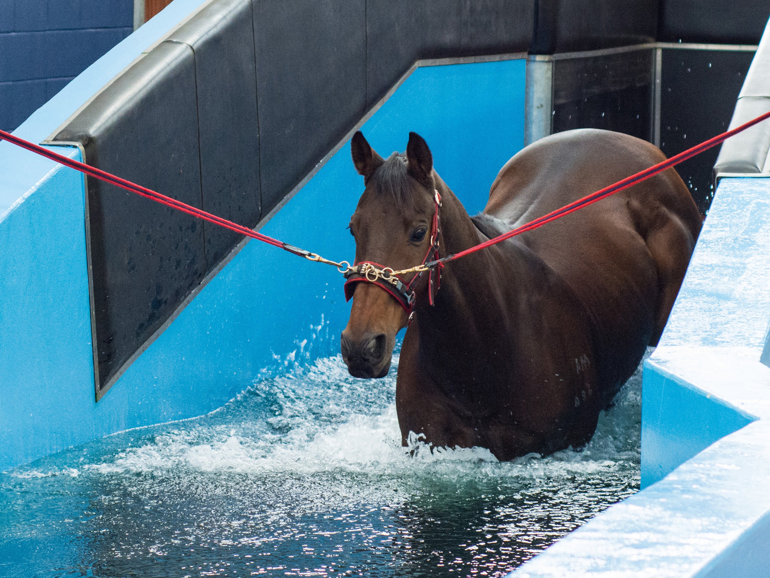 Will hydrotherapy benefit my horse? Your Horse Magazine
