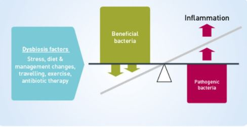 Dysbiosis infographic 2 (MSD owned).JPG