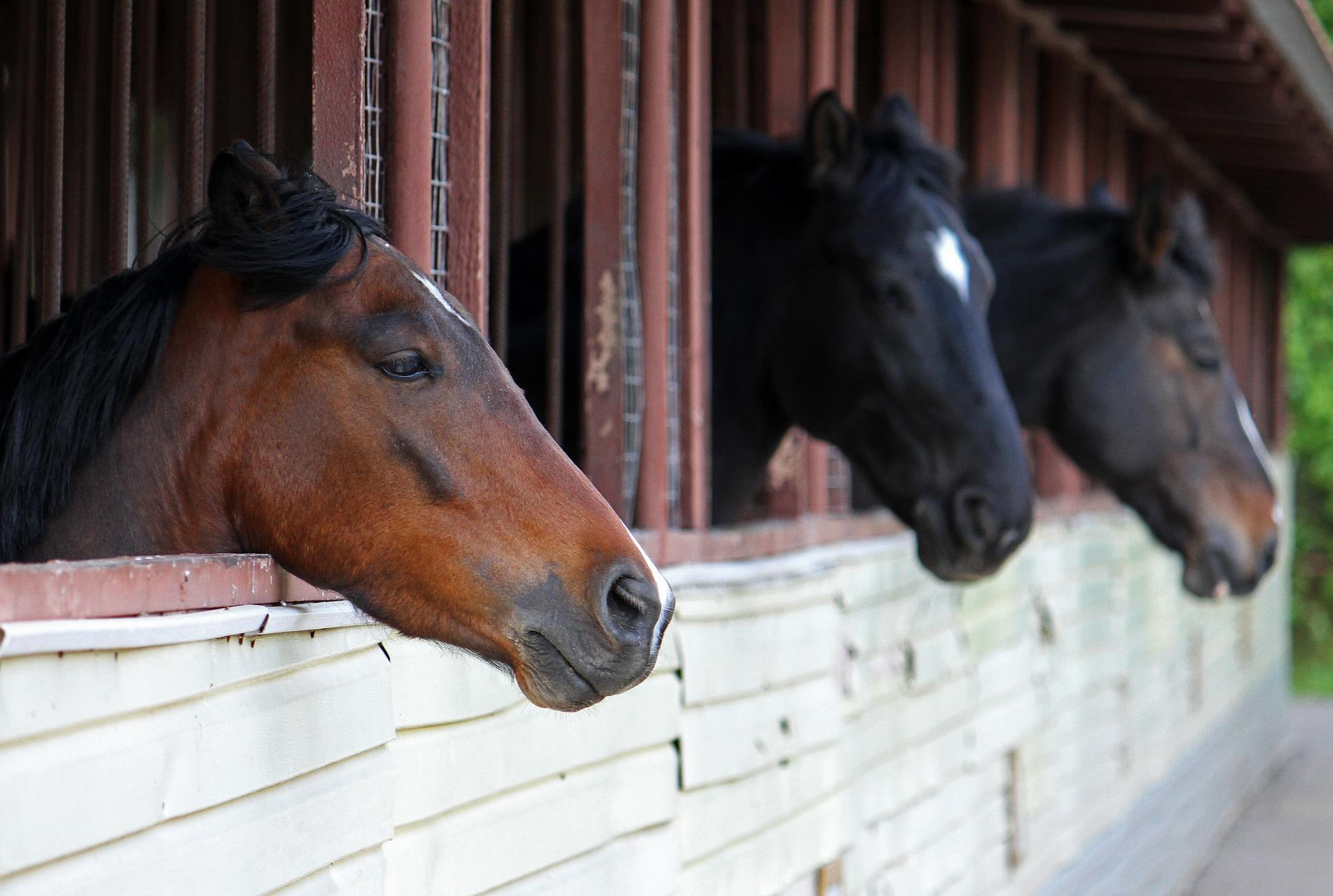 horses-2579482_19203.jpg