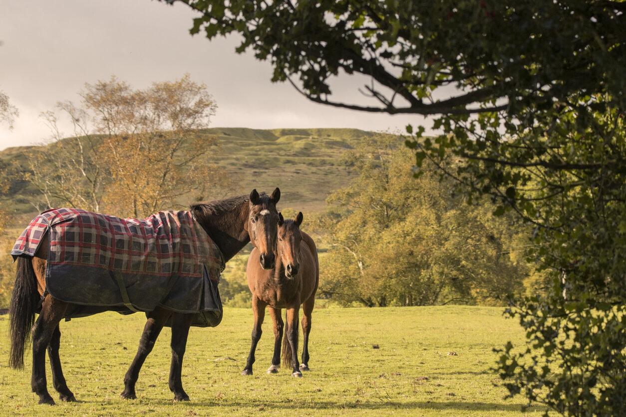 Haygain horses rugging.jpeg