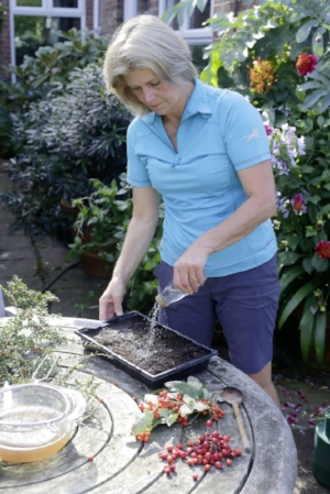 4. Sprinkle a thin layer of compost on the surface and then water in the well. Keep the tray in a cold frame or sheltered spot over winter.