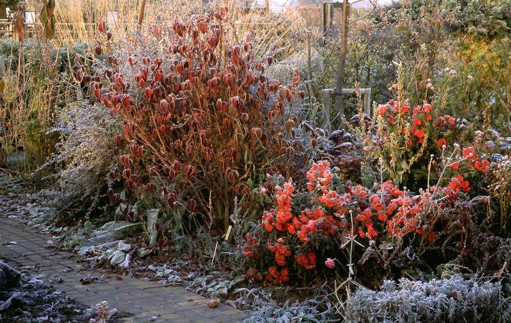 November — Garden News