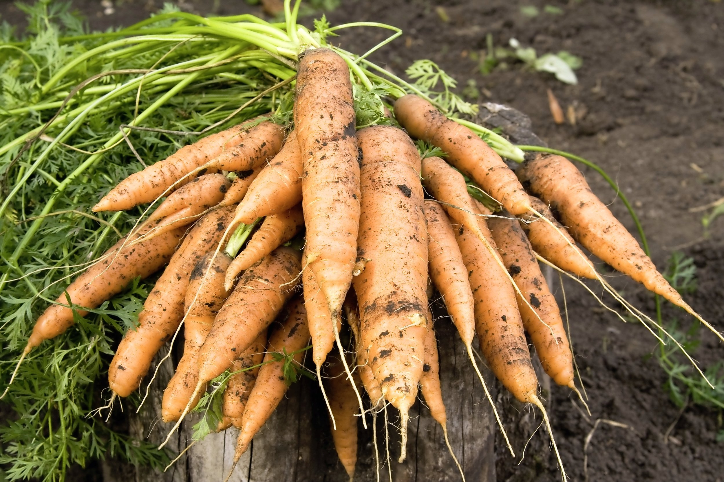 Root veg