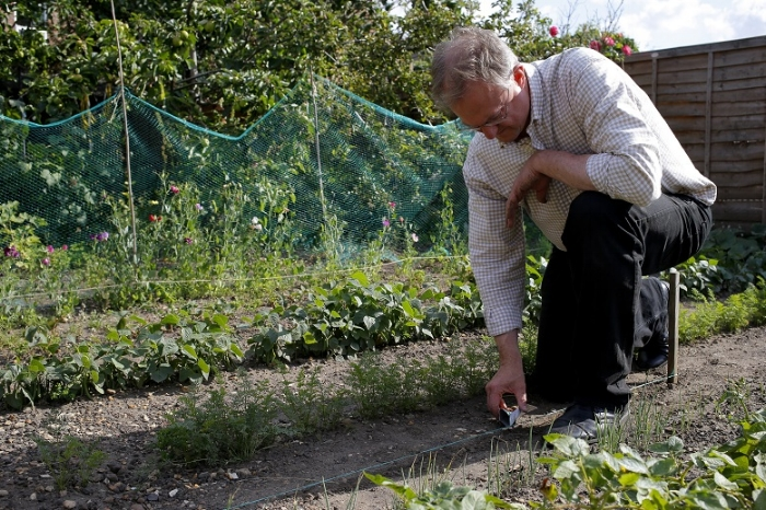 Catch crops are useful, efficient space savers, which tuck into gaps when other crops have finished, or as they're still growing, thereby maximising yield.  Most crops can be grown close together, so if you spot any spaces here and there, sow some quick-growing, tasty produce for harvest in just a few weeks. You'll be picking and eating some of these a couple of times over before some of your other crops even get near maturing!  Once you've harvested your potatoes, for example, there'll be vast spaces ready and waiting for some quick croppers such as coriander, radish and lettuce, which will zoom up in the same soil. As potatoes are hungry plants and usually take all the available nutrients from the soil, just dig in a bit of compost before you sow to help the new crops on a bit. Because closely cropping plants compete slightly with each other, they need a good, rich soil to grow happily in.  Under late-sown runner bean plants, 'intercrop' some new lettuce leaves, which will grow way before the beans do.
