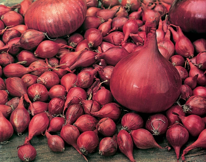 If you see 'Japanese onions' on seed packets or a bag of sets, you know you've got some tough cookies. First bred in Japan, they're hardy and resilient overwintering varieties that will grow outside uncovered over the next few months, then provide you with lots of large, crisp bulbs at the end of next spring. They need less light that other onions, so will grow through the short days of winter and early spring.  As their growing season is the opposite to many other crops, they don't take up space in summer when you want to leave room for more tender veg, so they're a great crop to give space over to in winter.  Right now is the time to start sowing seeds of these onions, either in trays for planting out in late September – which gives you a little control as to their growth – or into relatively light, well-draining soil on your plot. Sow seeds thinly in well-raked soil, but don't add fertiliser or it may encourage susceptible young foliage too soon. Cover lightly with compost and water in, then thin out seedlings in early spring next year.  In a month or so you'll also buy onion sets to plant out, but there's more fun in growing seed, and you can control the plants' growth into solid little bulbs, which don't bolt too soon, either.
