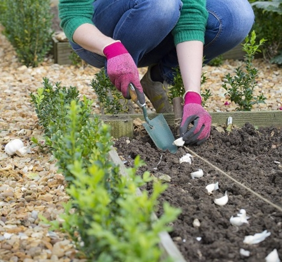 Whatever you do, don't leave your plot empty over winter. There's no need for it, as there's plenty to be getting on with and planting out now, to continue cropping for longer. Any break in your veg planting will be a break in harvesting produce, and if you're aiming for a year-round plot, with something to eat almost constantly, you need to keep it up and make the most of those crops that cope with the autumn and winter weather.  Another great reason to continue with the planting on your plot is that it's of huge benefit to the soil. Crops will keep the soil stable, less weedy and will prevent the washing away and leaching of nutrients during winter rains.  Anything you can do to keep your soil sturdy and healthy in the relative off-season is great.