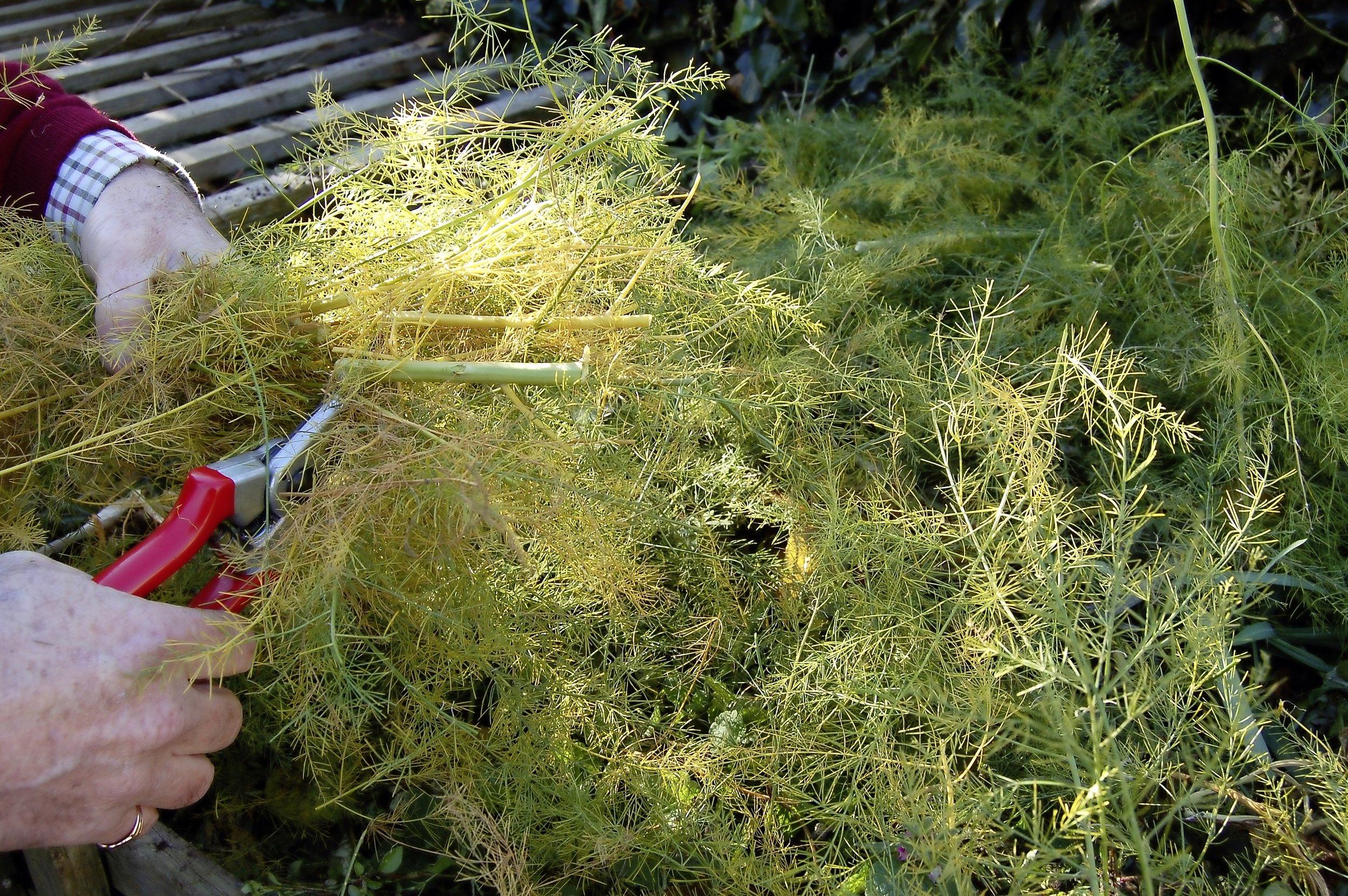 Asparagus - step 3.jpg
