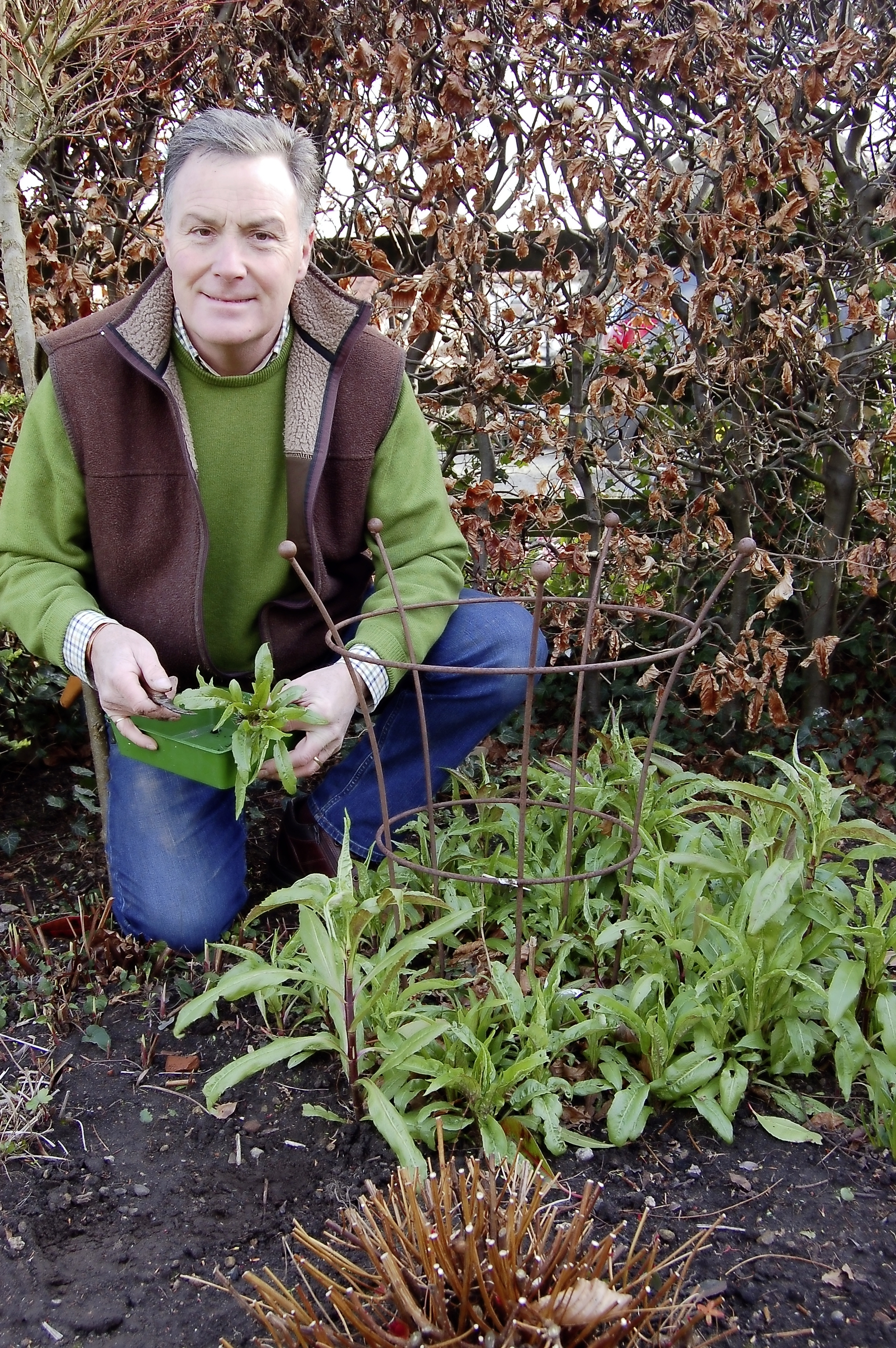 Herbaceous cuttings - main pic.jpg