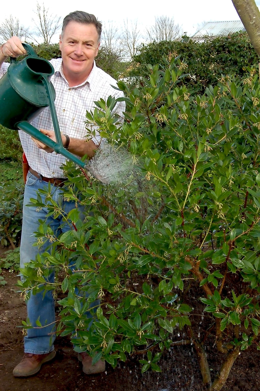 Transplanting+evergreens+-+Main+pic+%282%29.jpg