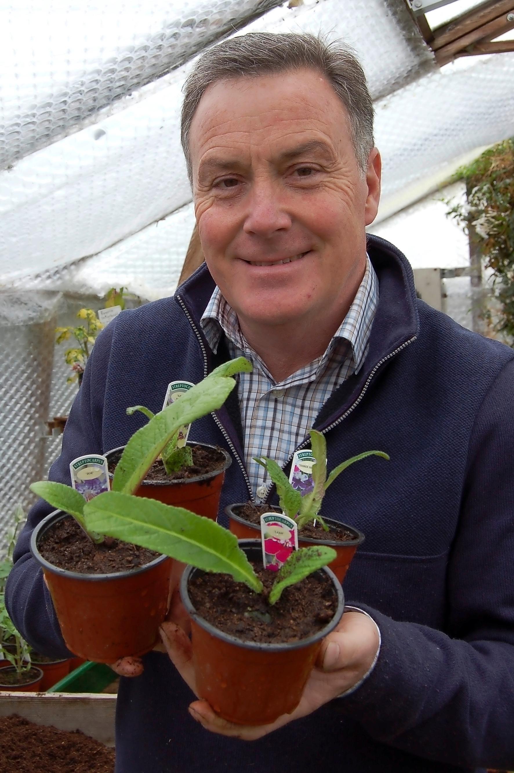 Pot+new+streptocarpus+-+main+pic.jpg