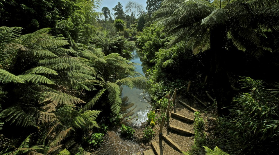 the-lost-gardens-of-heligan-cornwall-jungle-1.jpg