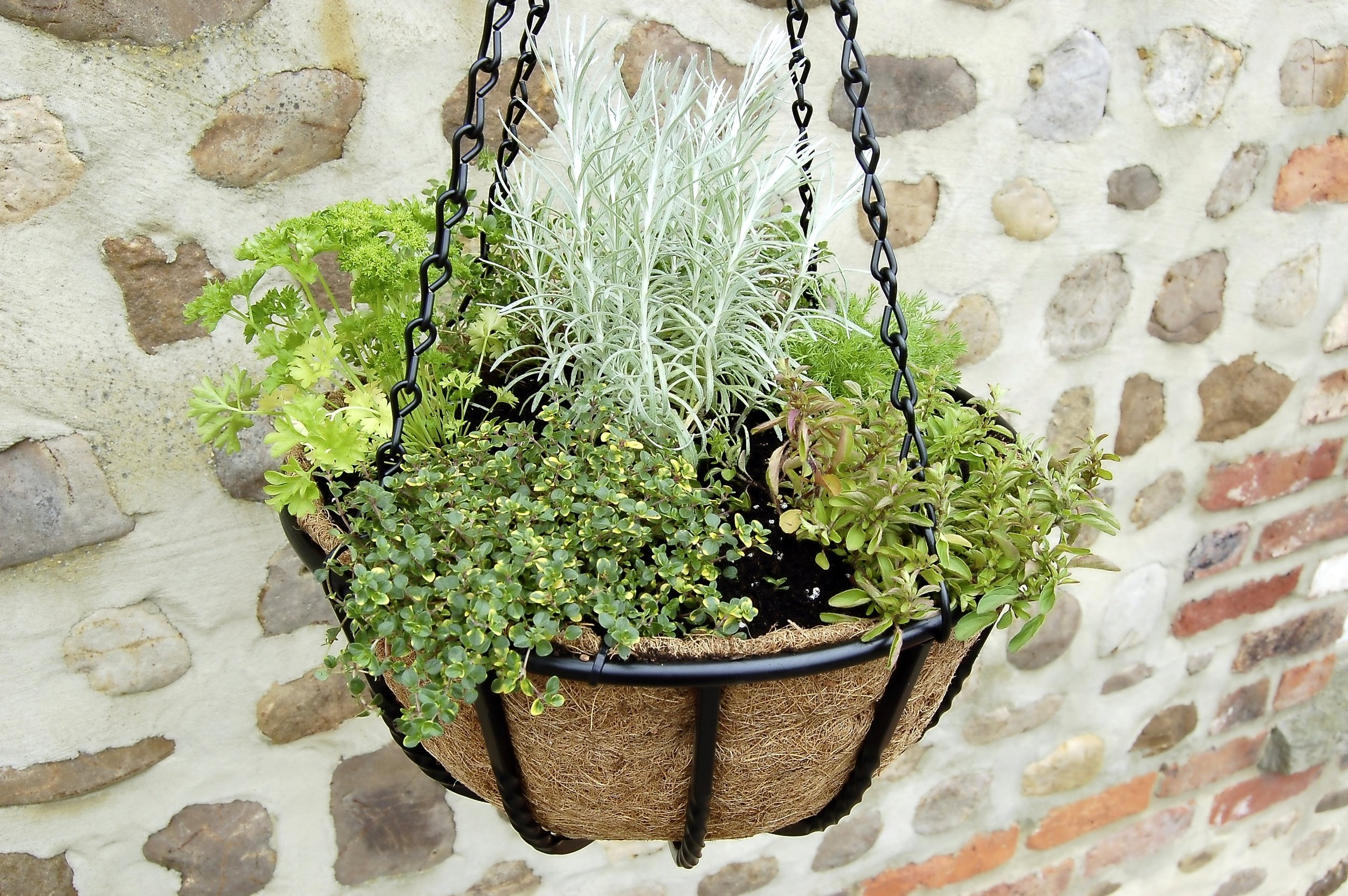 2. Small herbs are ideal planted in hanging baskets and hung on a sheltered, sunny wall