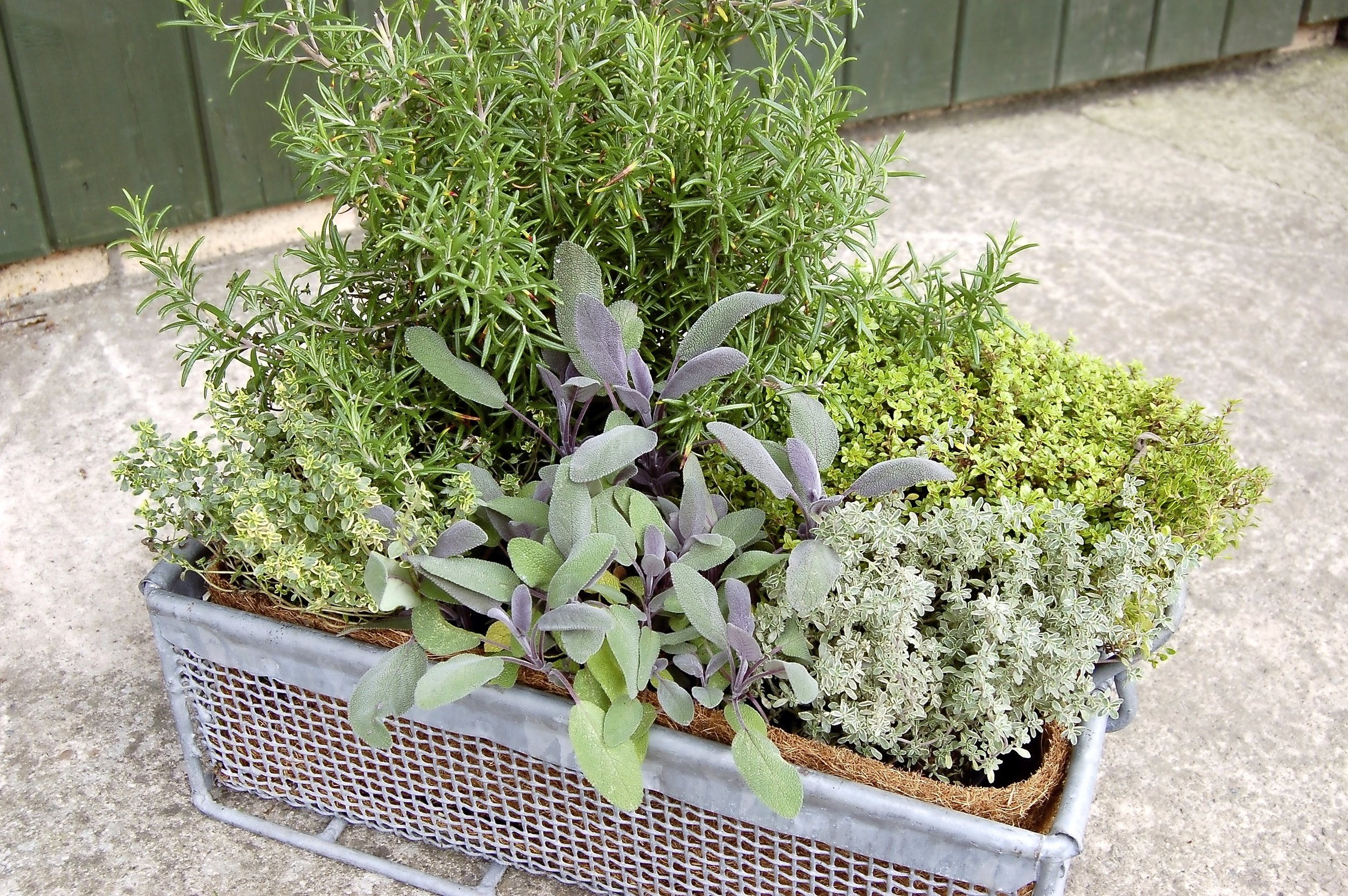 3. Use a selection of smaller plants with different shapes and foliage to plant a mixed container