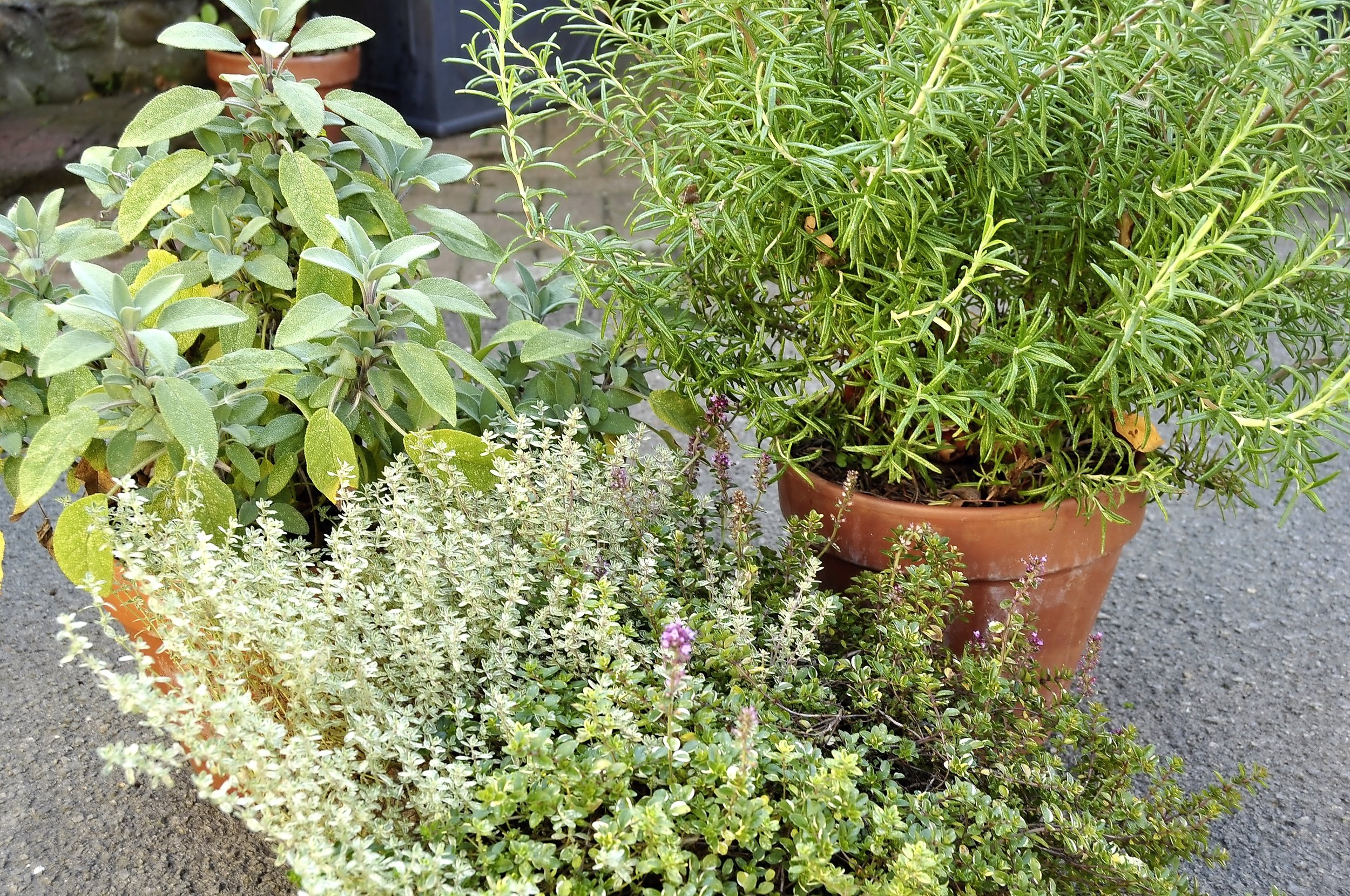 4. Display plants such as pots such as rosemary, sage and thyme, in large pots in groups by the kitchen door