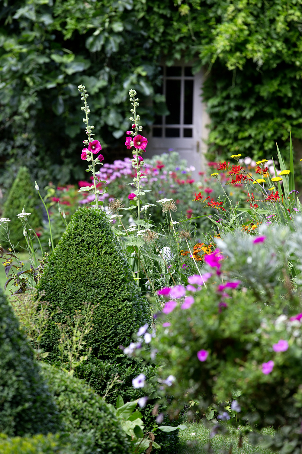 Hollyhocks and red crocosmia add height to the planting, with robust pyramids of  Buxus sempervirens  helping to 'anchor' the perennials