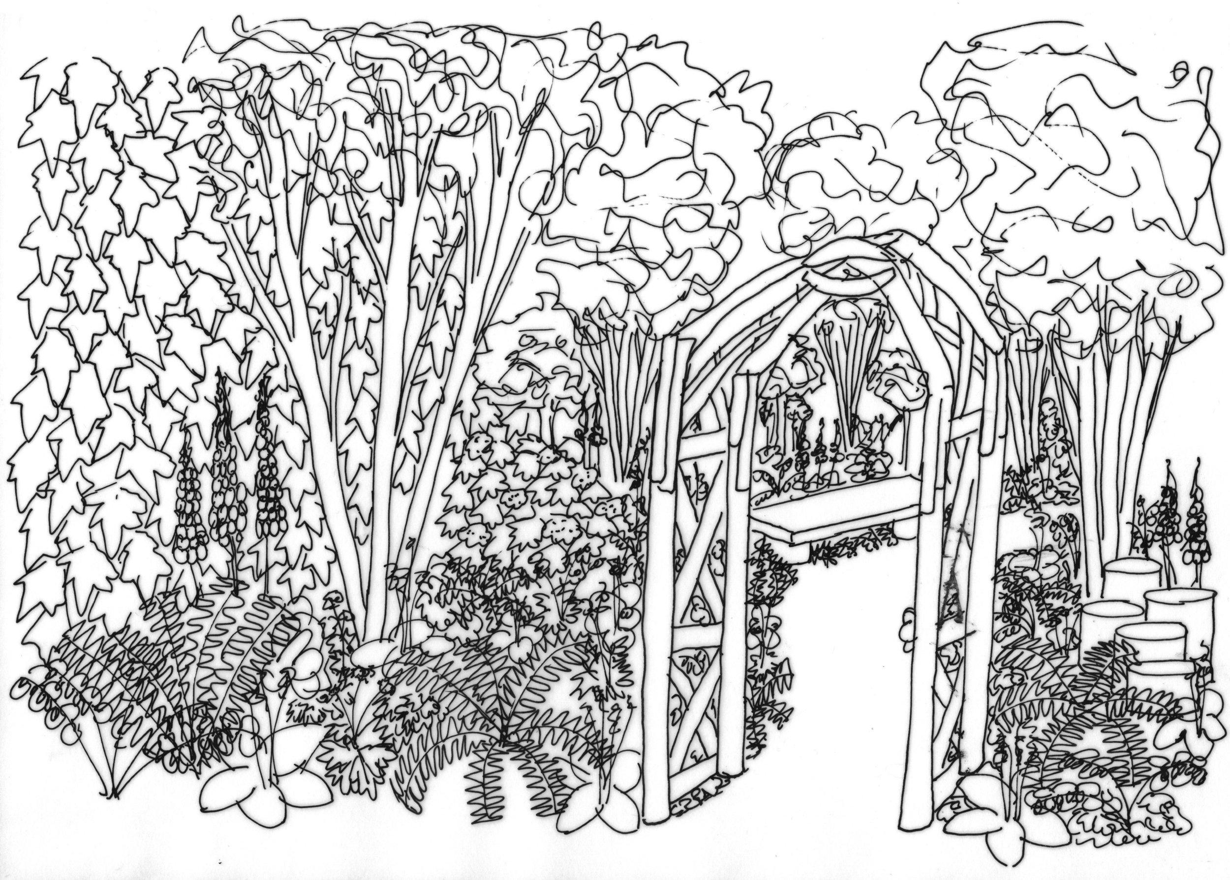 Woodland Garden - Garden Answers.jpg