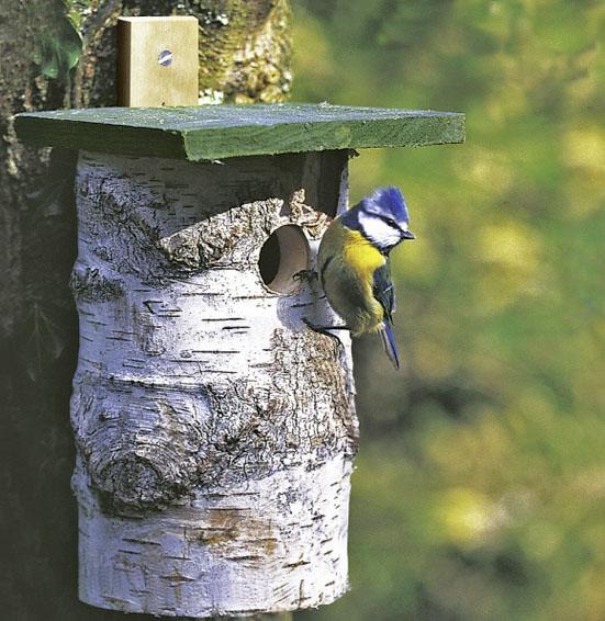 Birch log 32mm nest box £5.99 CJ Wildlife 0800 731 2820; www.birdfood.co.uk