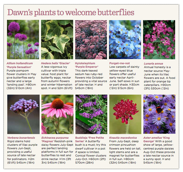 Dawns top 10 butterfly plants.jpg