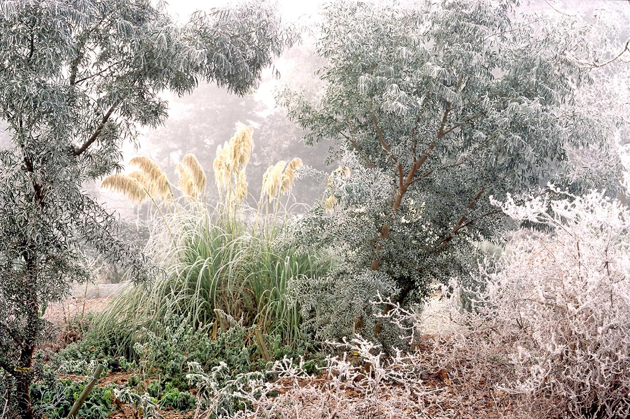 B611BC LIBY Hoar frost.jpg