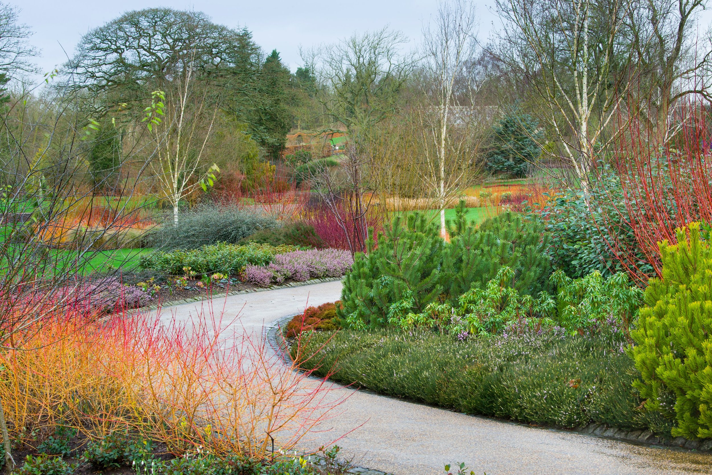 The Winter Walk at RHS Harlow Carr