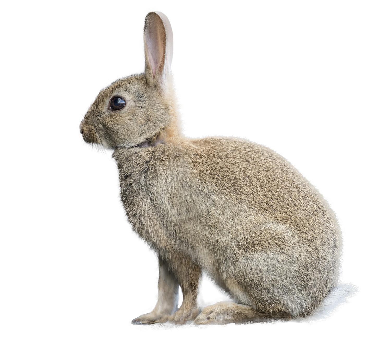 shutterstock_312884579 rabbit D.jpg